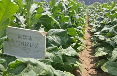 辽宁朝阳-烟草种植示范