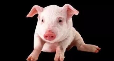 鸡粪、猪粪、牛粪...哪个养分最高?你一定弄错了...