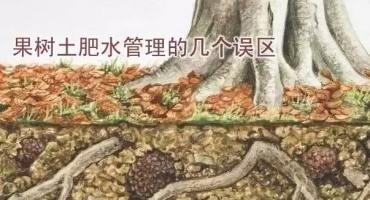 果树土肥水管理的误区!